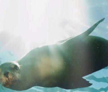 HEITON BUCKLEY GOREY PARTNERS WITH SEAL RESCUE IRELAND